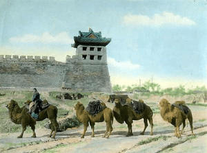 Business Espionage - China Camels
